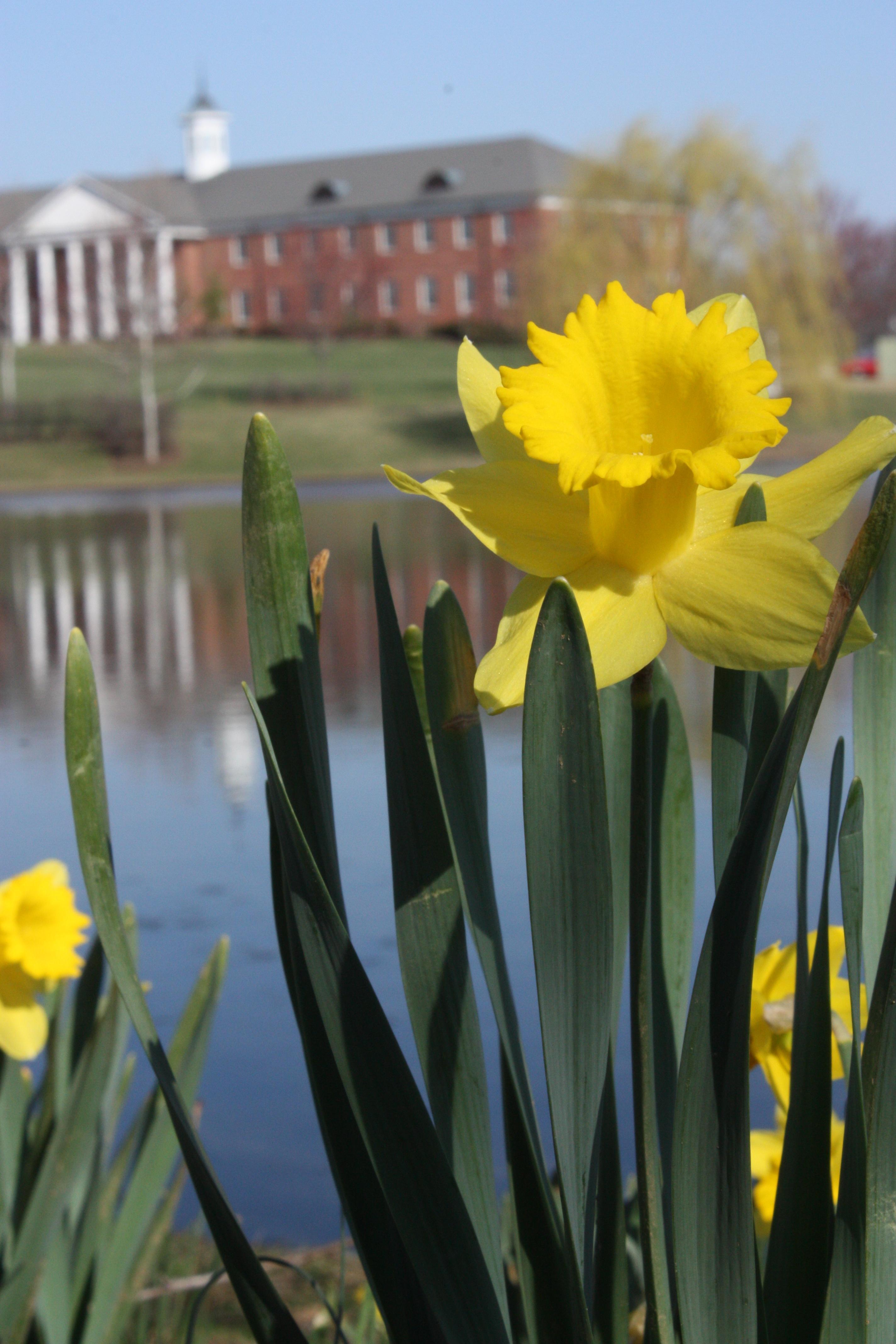 Founders_Flowers_Spring.jpg