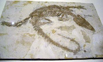 Monjurosuchus_splendens_2