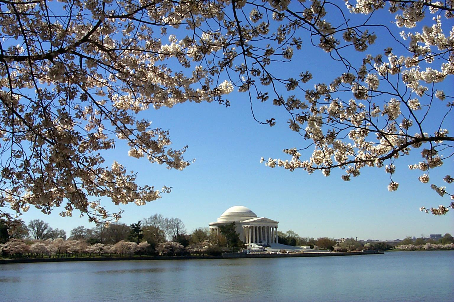Jefferson Memorial cherry blossoms Patrick Fitzgerald