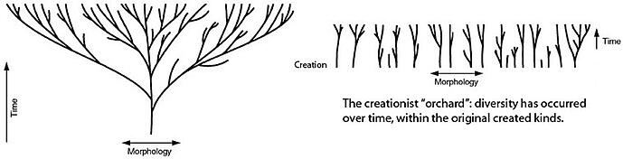 The Current State of the Creation Model