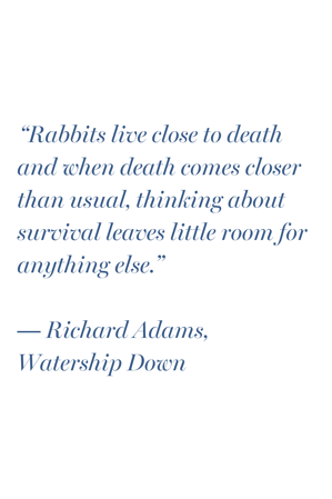 watership down adams quote