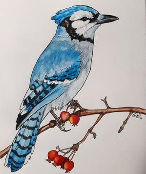 Rachel Grove Bird