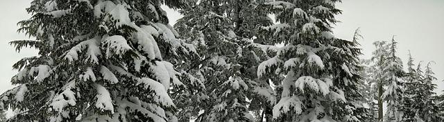 snow-378612_640.jpg