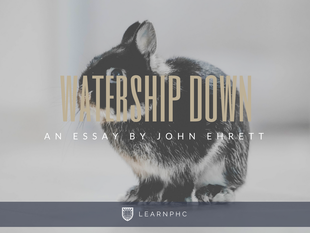 Why Watership Down Should Be On Every Students Reading List